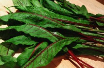 red veined sorrel
