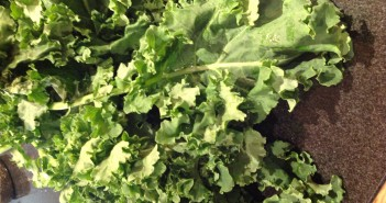 Siberian Kale
