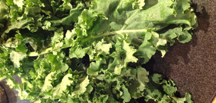 Seasonal Chef: Siberian Kale, Another Variety