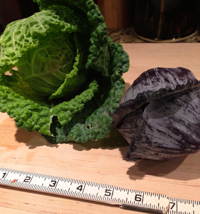 Small cabbages.