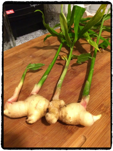 Fresh young ginger. The whole plant is edible!