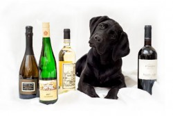 Guiding Eyes - Wine Tasting