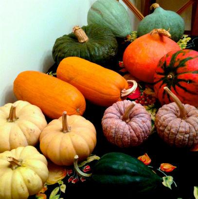 Various squash and pumpkins