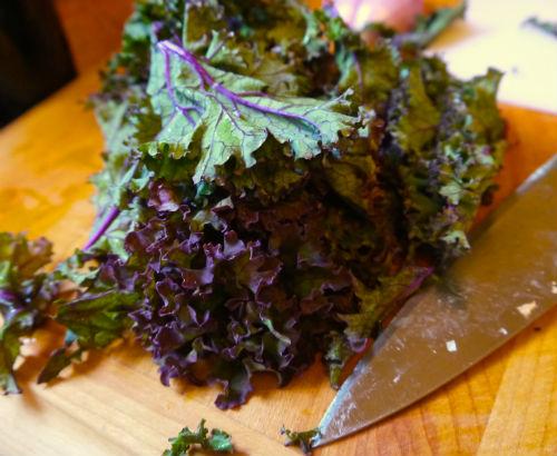 Red winterbor kale