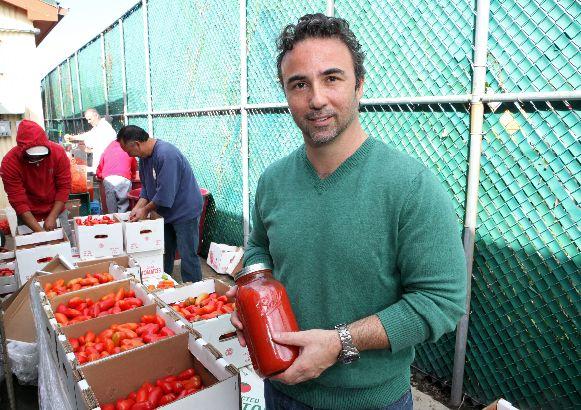TJN 1002 tomato harvest